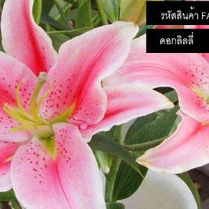 เมล็ดพันธุ์ดอกไม้