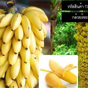 เมล็ดพันธุ์กล้วยร้อยหวี