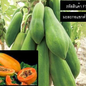 เมล็ดพันธุ์มะละกอแขกดำ(เรดบิ๊ก)