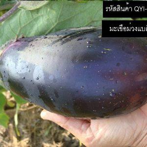 เมล็ดพันธุ์มะเขือม่วงแบล็กบิวตี้