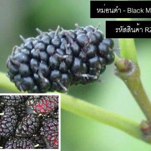 เมล็ดพันธุ์หม่อนดำ