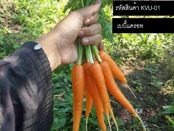 เมล็ดพันธุ์เบบี้แครอท