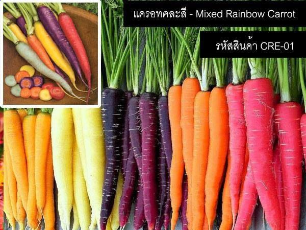 เมล็ดพันธุ์แครอทคละสี