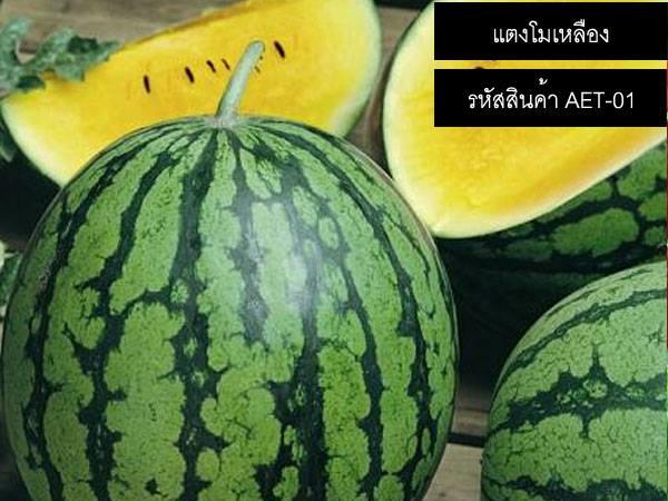 เมล็ดพันธุ์แตงโมเหลือง