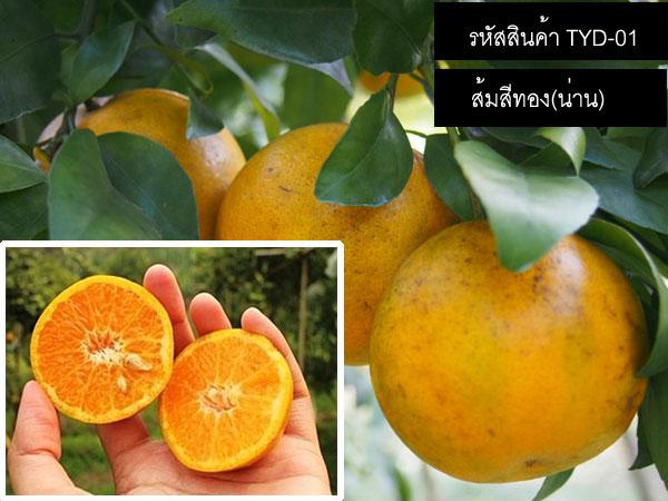 เมล็ดพันธุ์ส้มสีทองน่าน