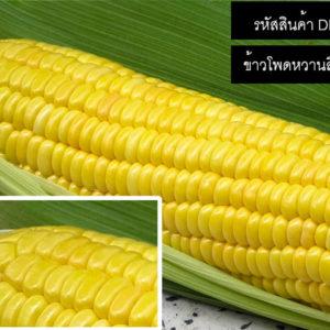 เมล็ดพันธุ์ข้าวโพดหวานสีเหลือง