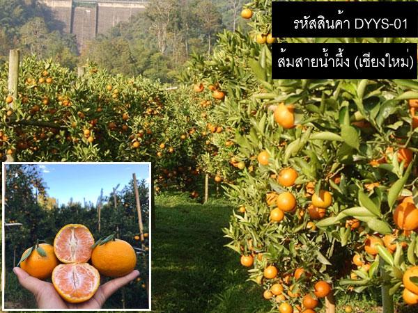 เมล็ดพันธ์ส้มสายน้ำผึ้ง